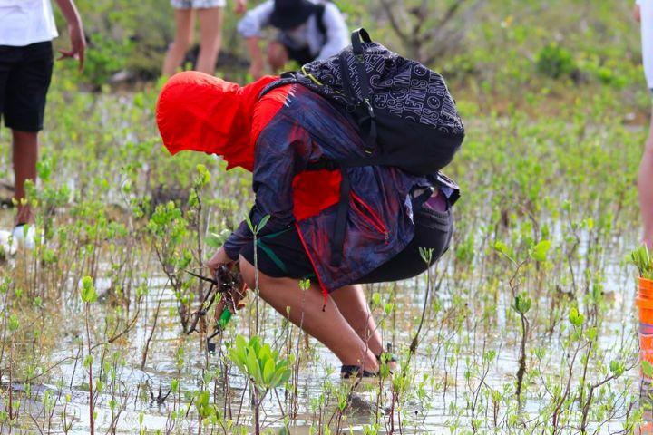 Earth_Successor_Volunteer_from____________________China_plants_mangroves_on_Grand_Bahama.jpg