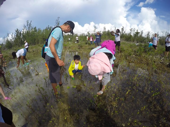 Even_the_liittlest_Earth_Successor________________planted_mangroves.jpg