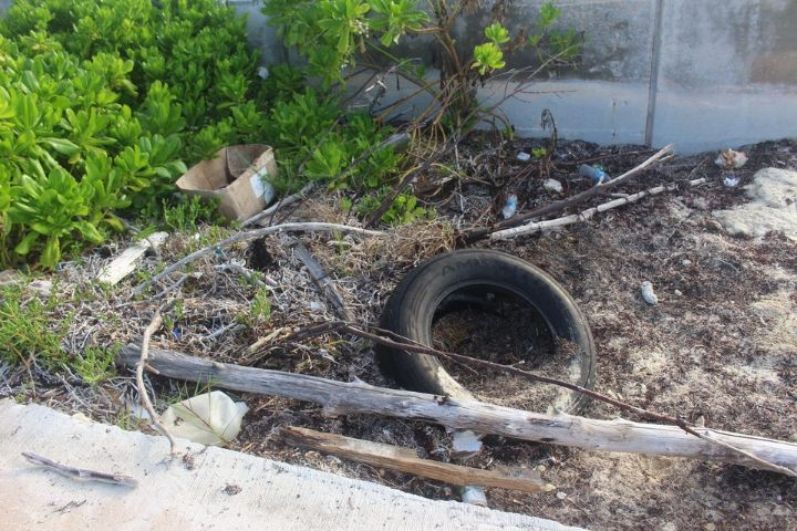 Tire_and_marine_debris_cleaned_up_____by_Gail_Woon__EARTHCARE_Founder_on_ICC_Day_2020.jpg