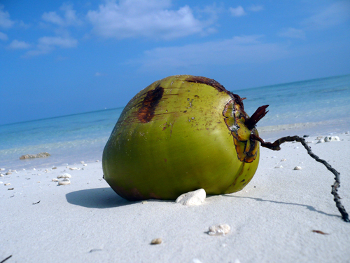 Coconutbeach07web.jpg
