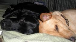 DogsSCN1471_2sm.jpg