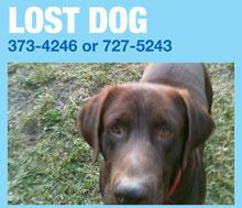 LOST-DOG-SHILOHsm.jpg