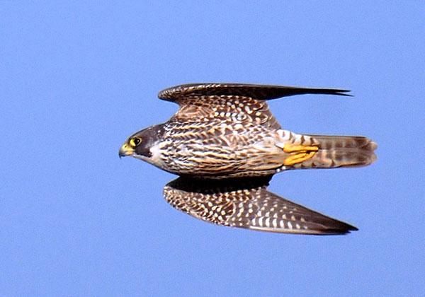 Birding5704604-lg_1_.jpg
