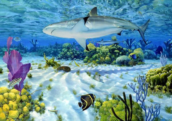 F-Ian-Coleman-Caribbean-Reef-Shark.jpg