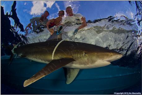 Shark-5.JPG