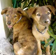 SM-puppies-007.jpg
