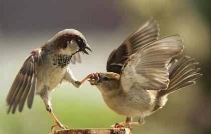 funny_birds_2.jpg