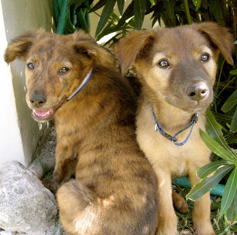 puppies_007.jpg